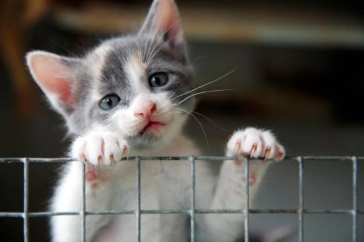 gattino abbandonato lanciato auto