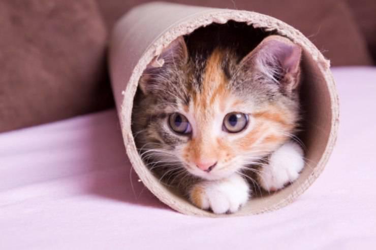gatto bloccato grondaia