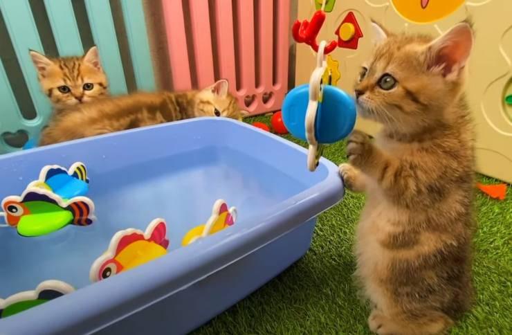 gattini giocano pescatori