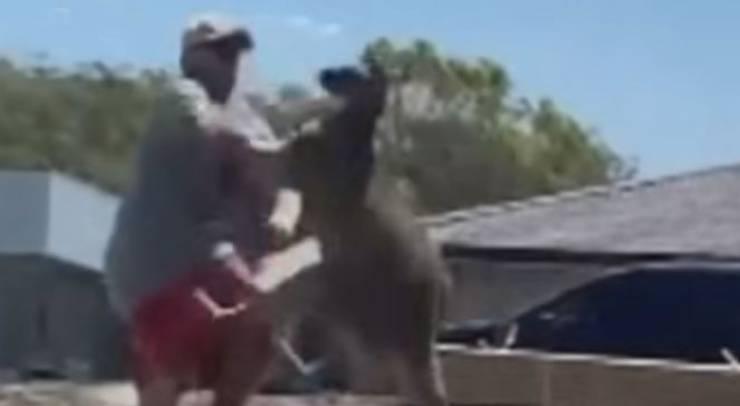 Canguro Uomo Video Attacco