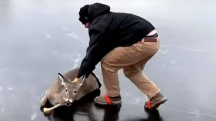 Cerbiatto Lago Ghiacciato Salvato Uomo
