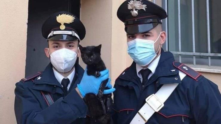 Gatto Salvato Carabinieri