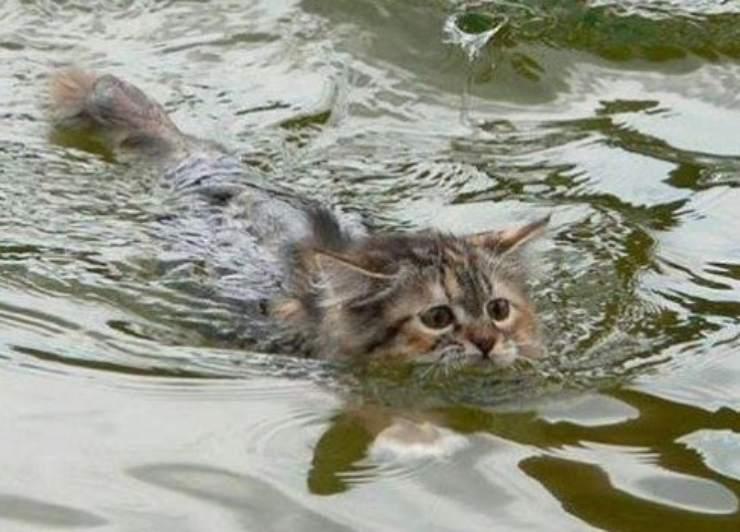 gatto caduto ponte fiume