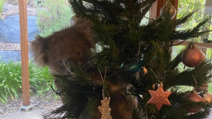 Koala Albero Natale