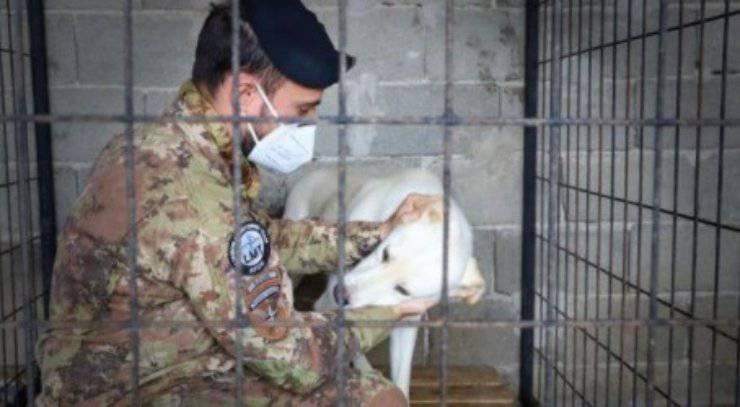 soldati italiani 30 cani Kosovo