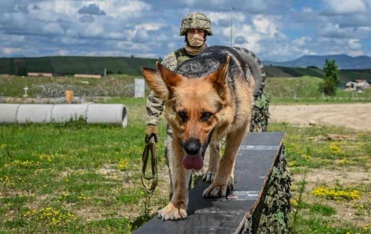 Militari italiani kosovo 30 cani randagi
