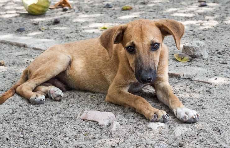 militari italiani kosovo 30 cani randagi aiutati