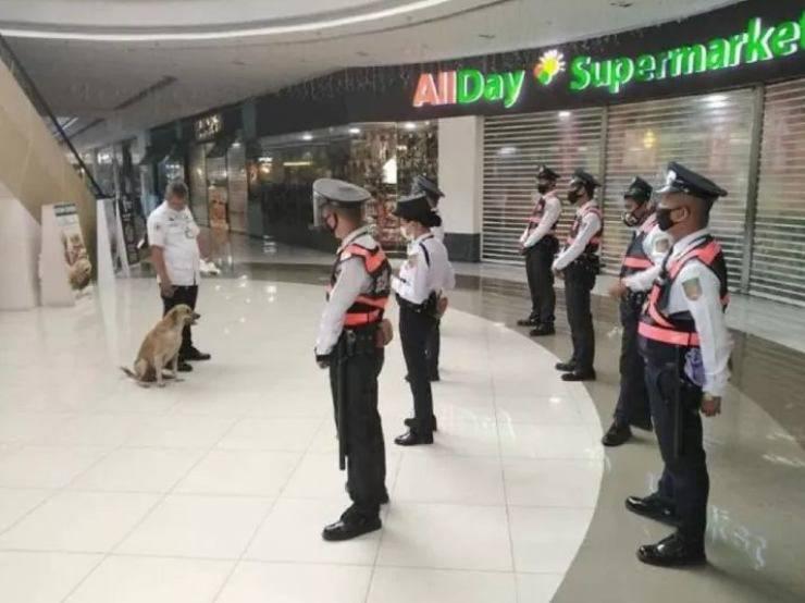 cane gettato strada guardia supermercato