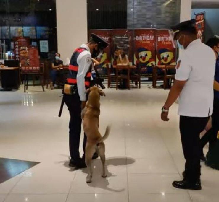 cane gettato strada supermercato guardia