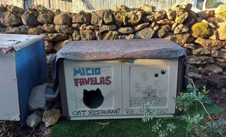 Micio Favelas Colonia Gatti