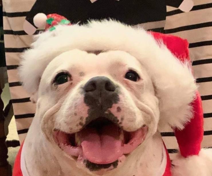 cagnolina furba scoperto regalo Natale albero