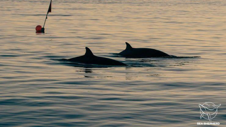 Nuova Specie Balena