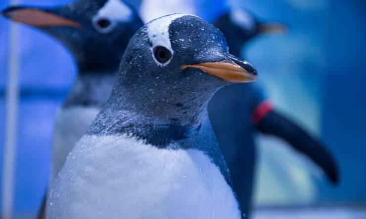 Pinguini Film Natale