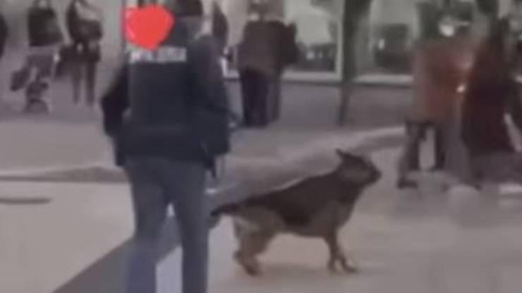 Poliziotto Calcio Cane Max