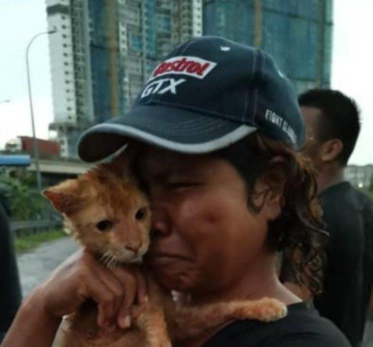 gattino caduto ponte fiume