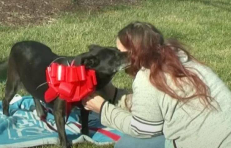 cagnolina ritrovata tre anni