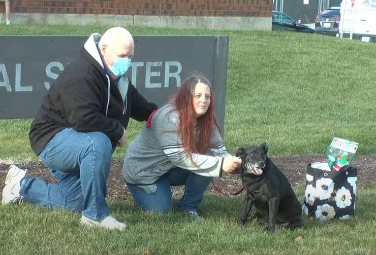 cagnolina scappa casa ritrovata tre anni