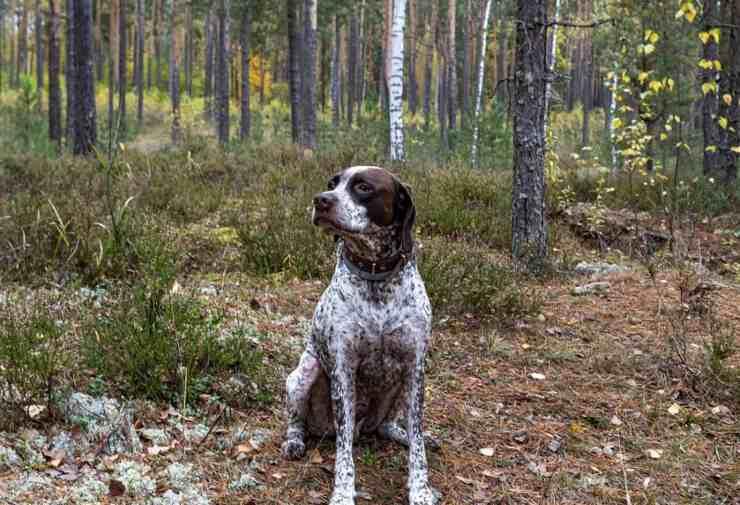 cagnolina scomparsa ritrovata tre anni