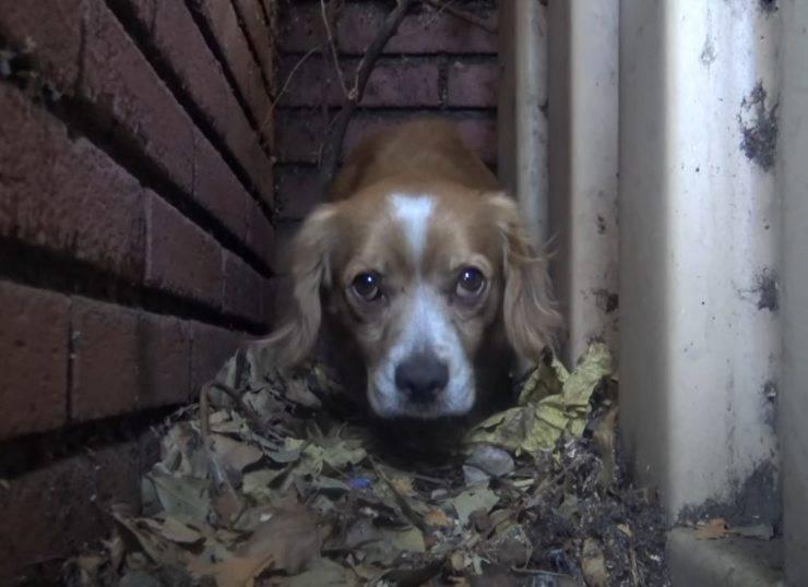 cagnolino nascosto terrore umani