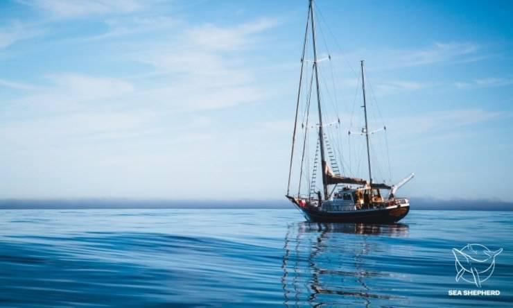 Nuova Specie Balena Sea Shepherd