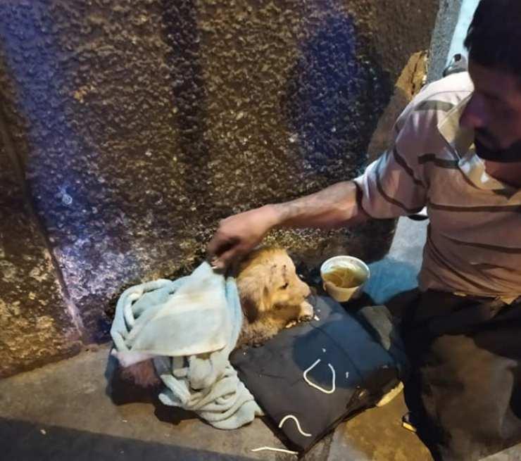 senzatetto donato cibo cagnolino randagio