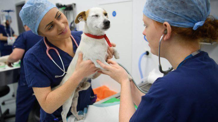 Cura Animali Farmaci Uso Umano