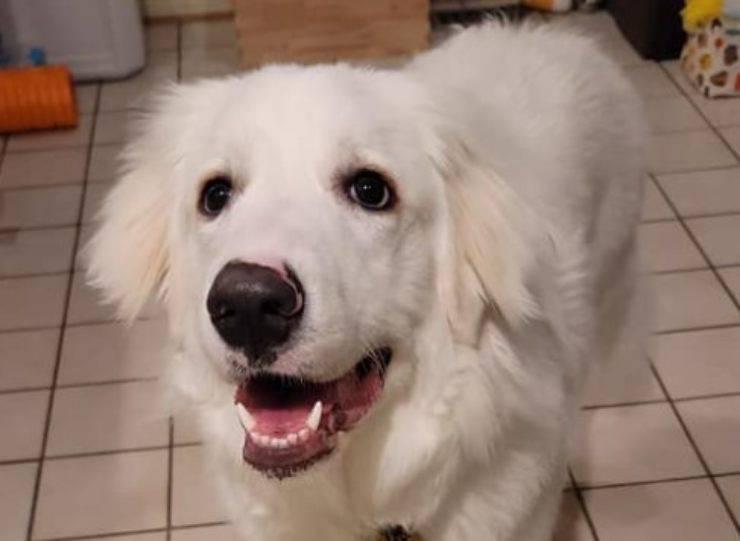 cane salvato famiglia incendio