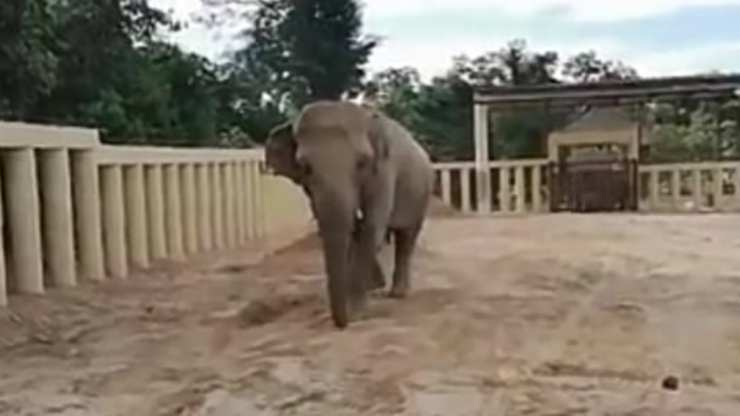 Kaavan finalmente libero (Foto video)