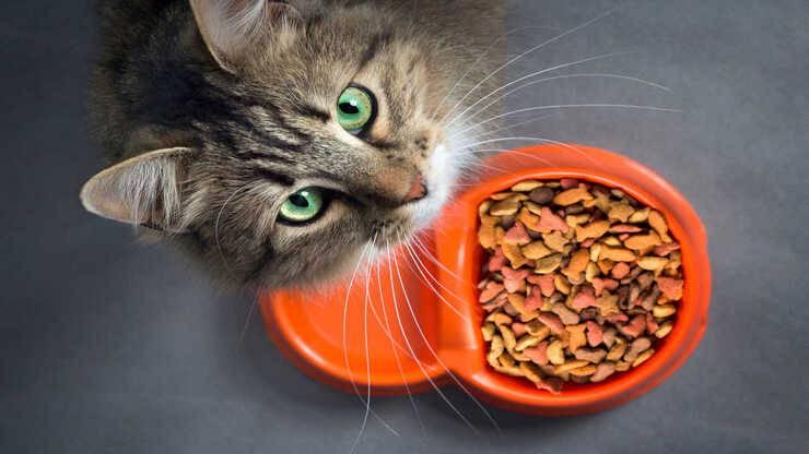 vitamina b12 gatto alimenti