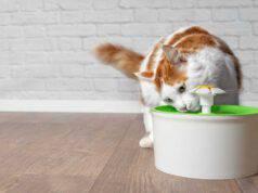 Fontanella per gatti