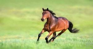 crisi epilettiche cavallo