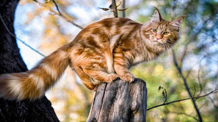 aiutare gatto scendere albero