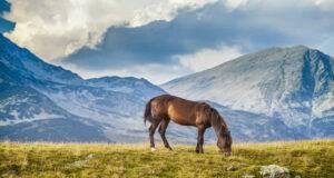 alimenti tossici cavallo