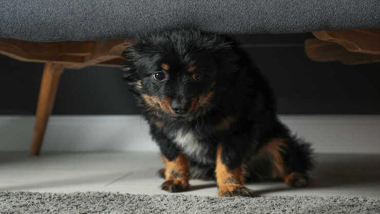 cane paura scopa