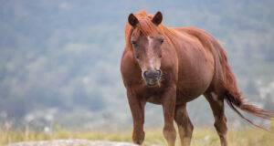 aspergillosi cavallo