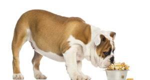 crocchette cani fatte in casa