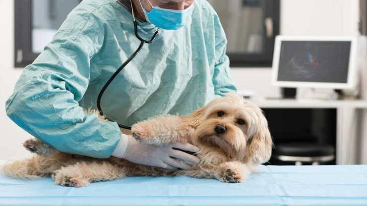 tumore mammella cane