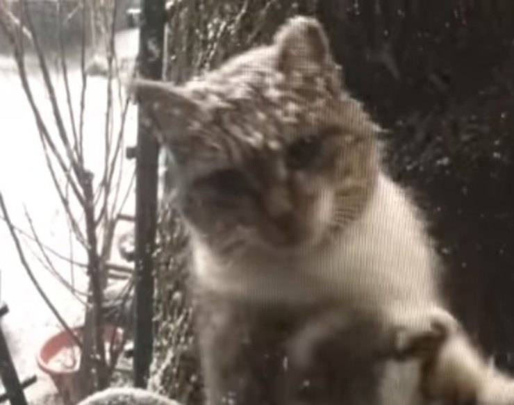 mamma gatta chiede aiuto piccoli finestra