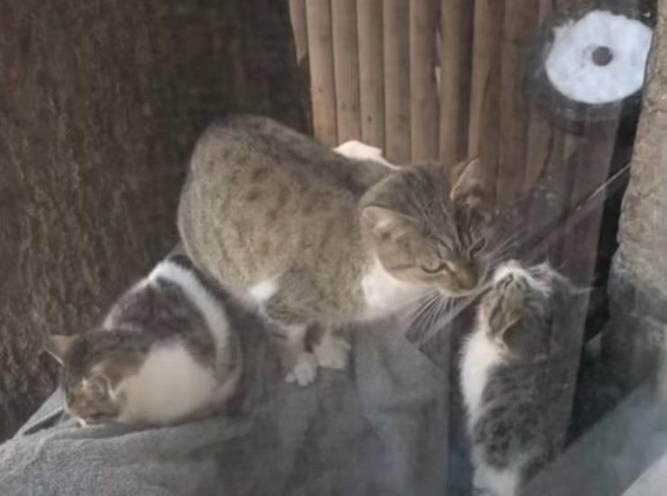 mamma gatta aiuto piccoli finestra