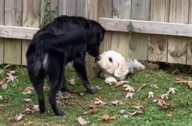 cagnolina socievole amico speciale