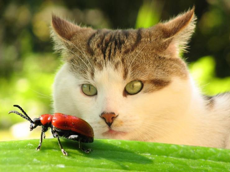 Gatto guarda coccinella