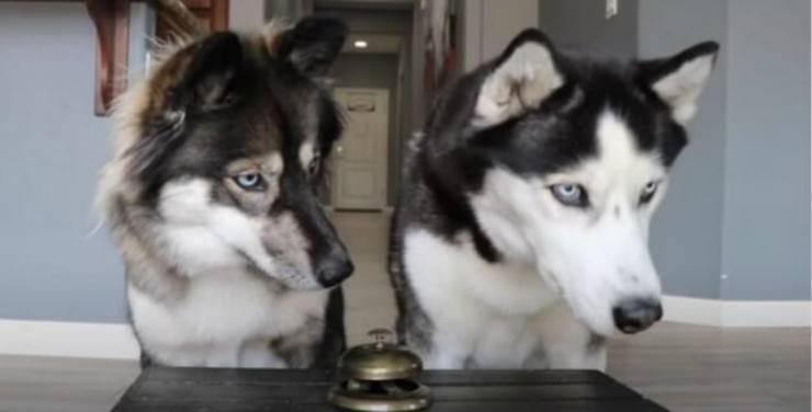I cani che osservano il padrone (Foto video)