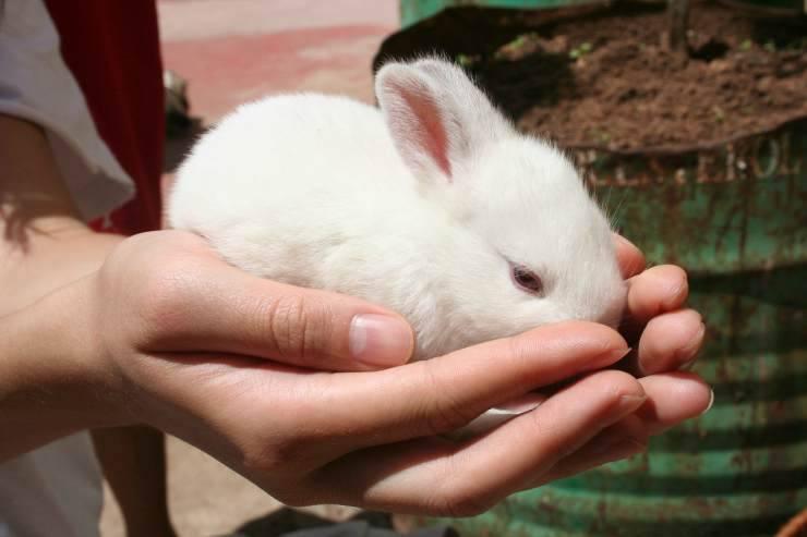 Coniglio tra le mani (Foto Pixabay)