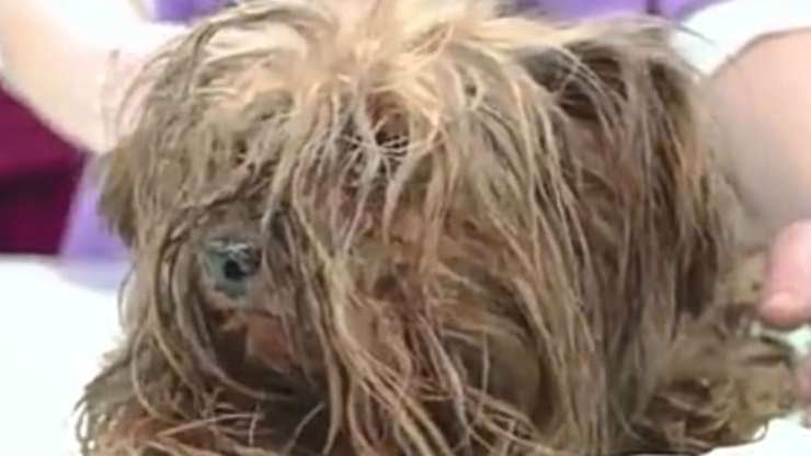 Cagnolino salvato (Foto video)