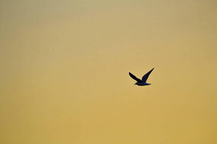 Uccello in volo (Foto Pixabay)