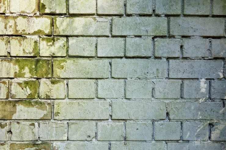Muffa sul muro esterno