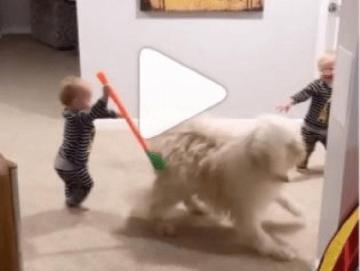 fratellini prendere cane video