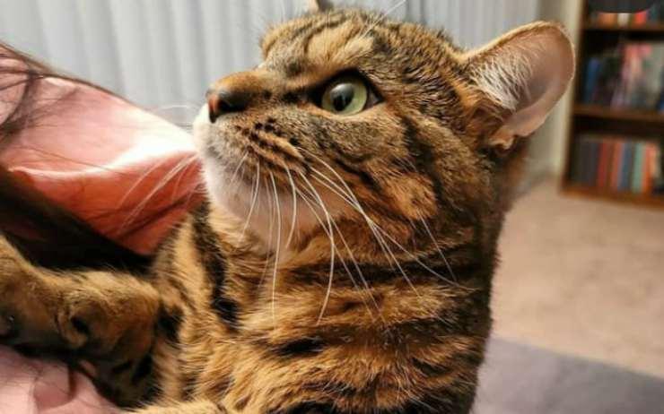 Il gatto alla ricerca delle coccole (Foto Instagram)