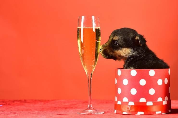 cane può bere spumante