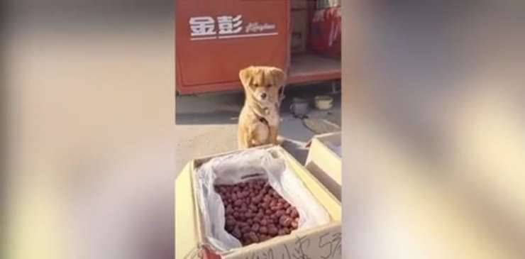 Il cane che controlla la bancarella